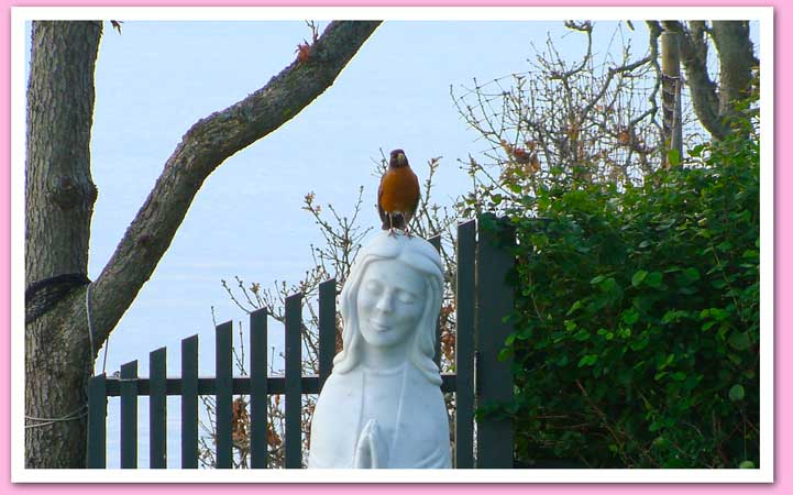 Robin on Mary's head